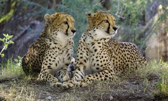 Parc de Massaï Mara _Kenya